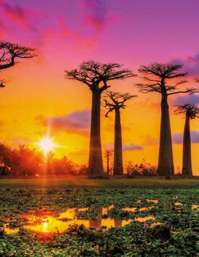 Allee de Baobab Morondava | Mianjaika Communication